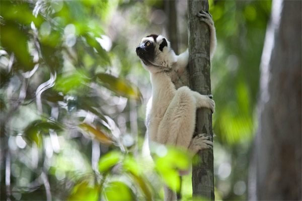 Madagascar-The-Lost-Makay-01
